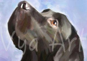 Drawing Black Dogs 4 Th Of July Black Labrador Gun Dog Print Retriever Fine by Vyaart