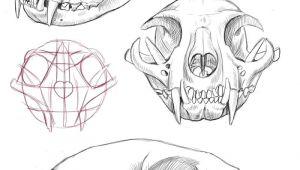 Drawing Cat Skull Cat Skull Anatomy Google Search Cat Tattoo Final Drawi