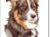 Drawing Collie Dogs Border Collie Painting Art Painting Painting Art Border