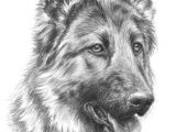 Drawing Collie Dogs Image Result for Rysunki Oa A Wkiem Zwierza T Beautiful Places
