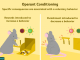 Drawing Connections Between Things that Occur In Sequence What is Operant Conditioning and How Does It Work