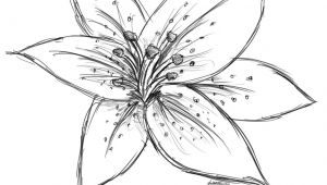 Drawing Craft Flowers Image Result for Sketch Lily Flower Craft Watercolor Techniques