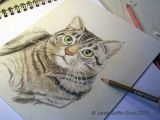 Drawing Cute Animals In Colored Pencil Draw A Majestic Cat In Colored Pencil Art Stuff Pinterest