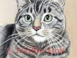 Drawing Cute Animals In Colored Pencil How to Draw A Cat In Colored Pencil