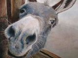 Drawing Cute Donkey Pin by Frank Quillen On Science Nature Pinterest Horses