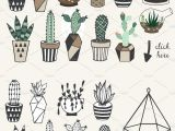 Drawing Cute Plants 75 Off Succulents Unlimited License by Lokko Studio On