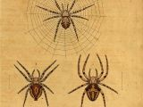 Drawing Cute Spider Spider Scientific Illustration Spider Spider Art Illustration
