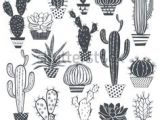 Drawing Cute Succulents 21 Best Succulent Sketch Images Cactus Drawing Cactus Plants