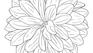 Drawing Dahlia Flowers Pin by Lynn Dragonfly On Drawing Doodles and Dangles Pinterest