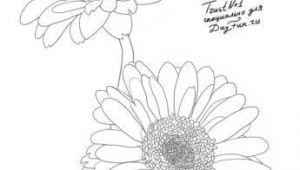Drawing Daisy Flowers How to Draw Gerberas Step by Step 4 Watercolor Drawings Art