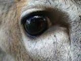 Drawing Deer Eye 35 Best Deer Eyes Images Deer Deer Pictures Taxidermy