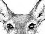 Drawing Deer Eye What Colors Can Deer See