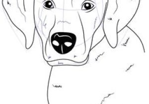 Drawing Different Dog Breeds 112 Best Dog Breed Images Dog Paintings Drawings Of Dogs Doggies
