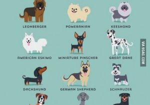 Drawing Different Dog Breeds German Dogs Good to Know Pinterest Dogs Pets and Dog Breeds