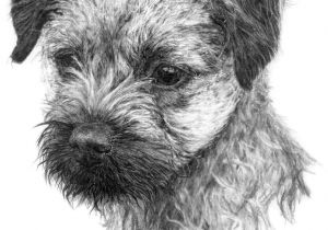 Drawing Different Dog Breeds Image Result for Graphite Drawing Dog Border Terrier Puppies