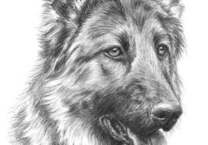 Drawing Different Dog Breeds Image Result for Rysunki Oa A Wkiem Zwierza T Beautiful Places