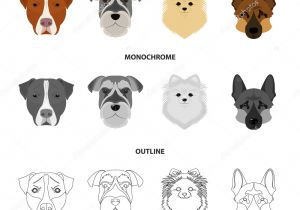 Drawing Different Dog Breeds Muzzle Of Different Breeds Of Dogs Dog Breed Stafford Spitz