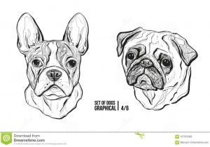 Drawing Different Dog Breeds Set Of Dogs Breeds French Bulldog and Pug Graphical Vector