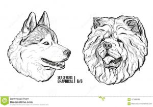 Drawing Different Dog Breeds Set Of Dogs Breeds Husky and Chow Chow Graphical Vector