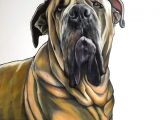 Drawing Dog Colour Pin by Sue Sayne Trimble On Artwork Pinterest Pet Portraits