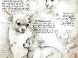 Drawing Dog Go Chihuahua Study A Full Size Da Vinci Style Drawing Chihuahua