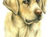 Drawing Dog Hair with Colored Pencils 121 Best Colored Pencil Animal Dog Images Color Pencil Art