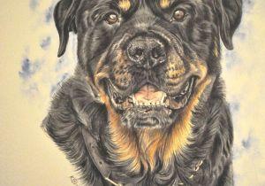 Drawing Dog Tags Gouache Painting Www Katyferrari Com Rotties Pinterest