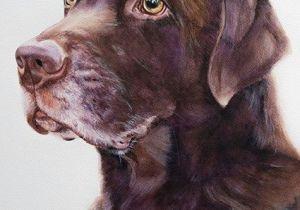 Drawing Dog Tags Labrador Boy Watercolor Artist Tanja Kooymans sofi Cocker In 2019