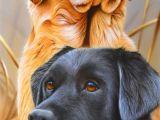Drawing Dog Tree by Artist Jerry Gadamus Labradorretriever Dogs Dog Art Dog