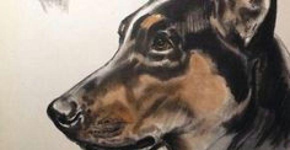 Drawing Dogs by Diana Thorne 43 Best Dog Art Images Dog Portraits Vintage Dog Dog Breeds