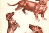 Drawing Dogs by Diana Thorne Diana Thorne Vintage Dog Print Book Plate 13 1 2 X 10 1 4 Etsy