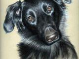Drawing Dogs Eyes In Pastel 36 Best Art Work Of Nicole Zeug Images In 2019 Animal Drawings
