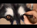 Drawing Dogs Eyes In Pastel Timelapse soft Pastel Drawing Of A Husky Youtube