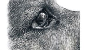 Drawing Dogs Fur How I Draw Dogs Eyes Youtube Fur In 2018 Pinterest Draw Art