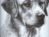 Drawing Dogs In Pencil 101 Best Drawings Of Dogs Images Pencil Drawings Pencil Art