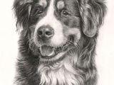 Drawing Dogs Sketch Beautiful Bernese Mountain Dog 3 Drawings Of Dogs Mountain Dogs