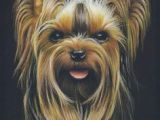 Drawing Dogs with Colored Pencils 65 Best Colored Pencil Dogs I Love Images Drawings Animal