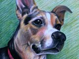 Drawing Dogs with Colored Pencils Custom Colored Pencil Pet Portrait One Subject by Anniedraper