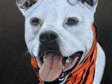 Drawing Dogs with Colored Pencils Pet Portrait Colored Pencil Cody Hale Art Dog Art Pinterest