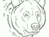 Drawing Easy Grizzly Bear 50 Best Bear Sketches Images Animal Drawings Bear Sketch Bear Art