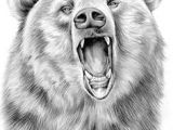 Drawing Easy Grizzly Bear 60 Best Bear Drawings Images Sketches Of Animals Animal Drawings