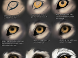 Drawing Eye Wolf Wolf Eye Tutorial by themysticwolf Deviantart Com On Deviantart