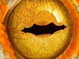 Drawing Eyes On Pumpkins 102 Best Dragon Eye Value Drawing Images In 2019 Dragon Eye