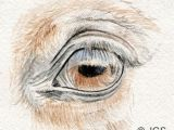 Drawing Eyes Outline Draw Horse Eyes Step by Step