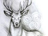 Drawing Fake Dogs Deer Head by Linnwarme Deviantart Com On Deviantart Pretty