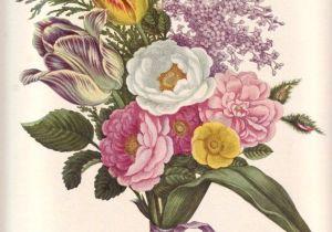 Drawing Flower for Wall Vintage Flower Print Large Rose Botanical Print Oversized