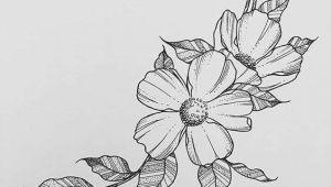 Drawing Flower Hd Photo 25 Fancy Draw A Flower Helpsite Us