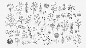 Drawing Flowers Calligraphy Pin Bossypixie D Journalinga Pinterest Drawings Doodles