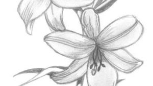 Drawing Flowers.com Lily Flowers Drawings Flowers Madonna Lily by Syris Darkness