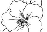 Drawing Flowers Course 28 Best Line Drawings Of Flowers Images Flower Designs Drawing